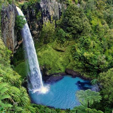 The Land of the Kiwis